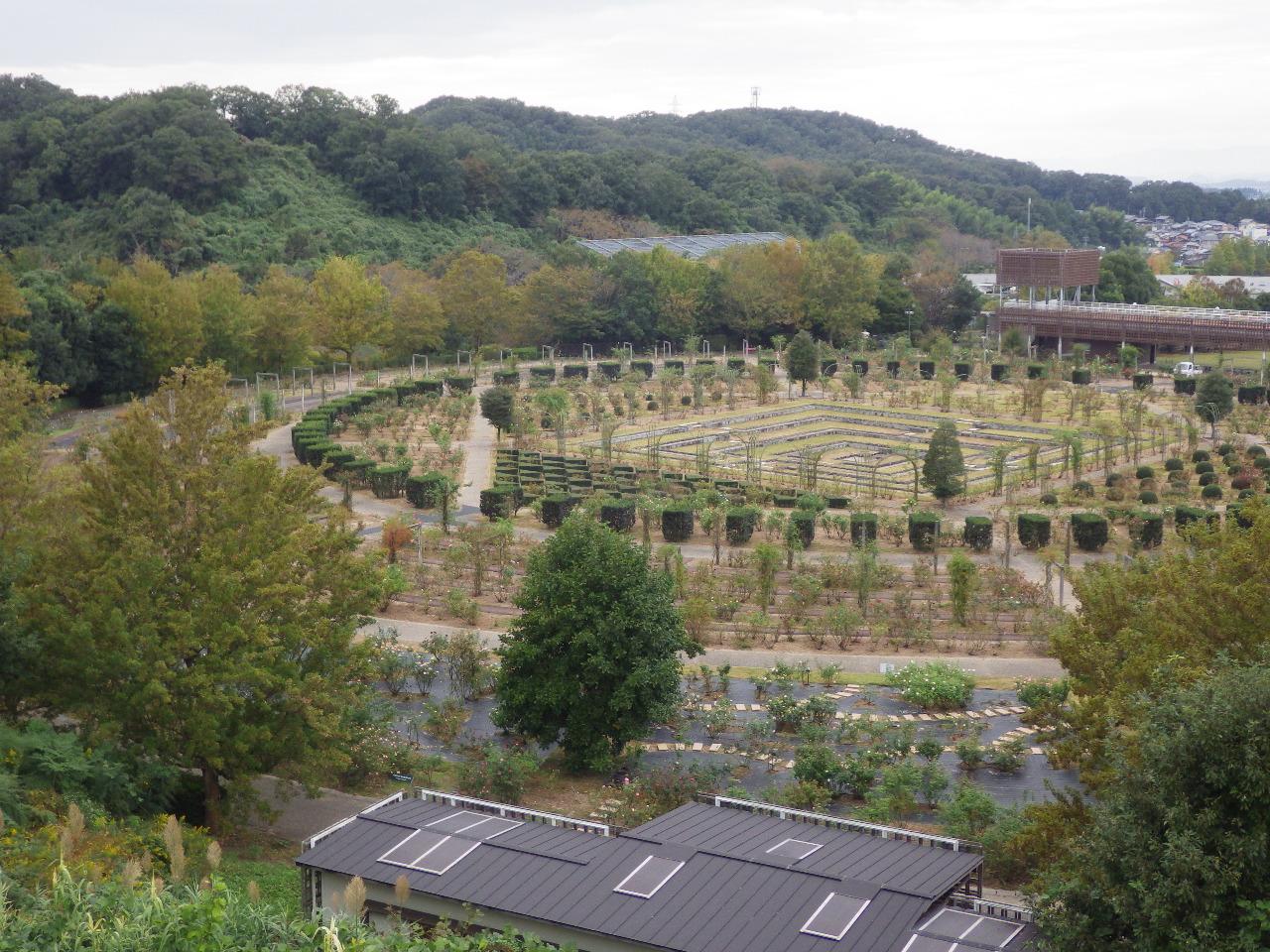 岐阜県 花フェスタ記念公園 バラ園土壌改良工事 着手前