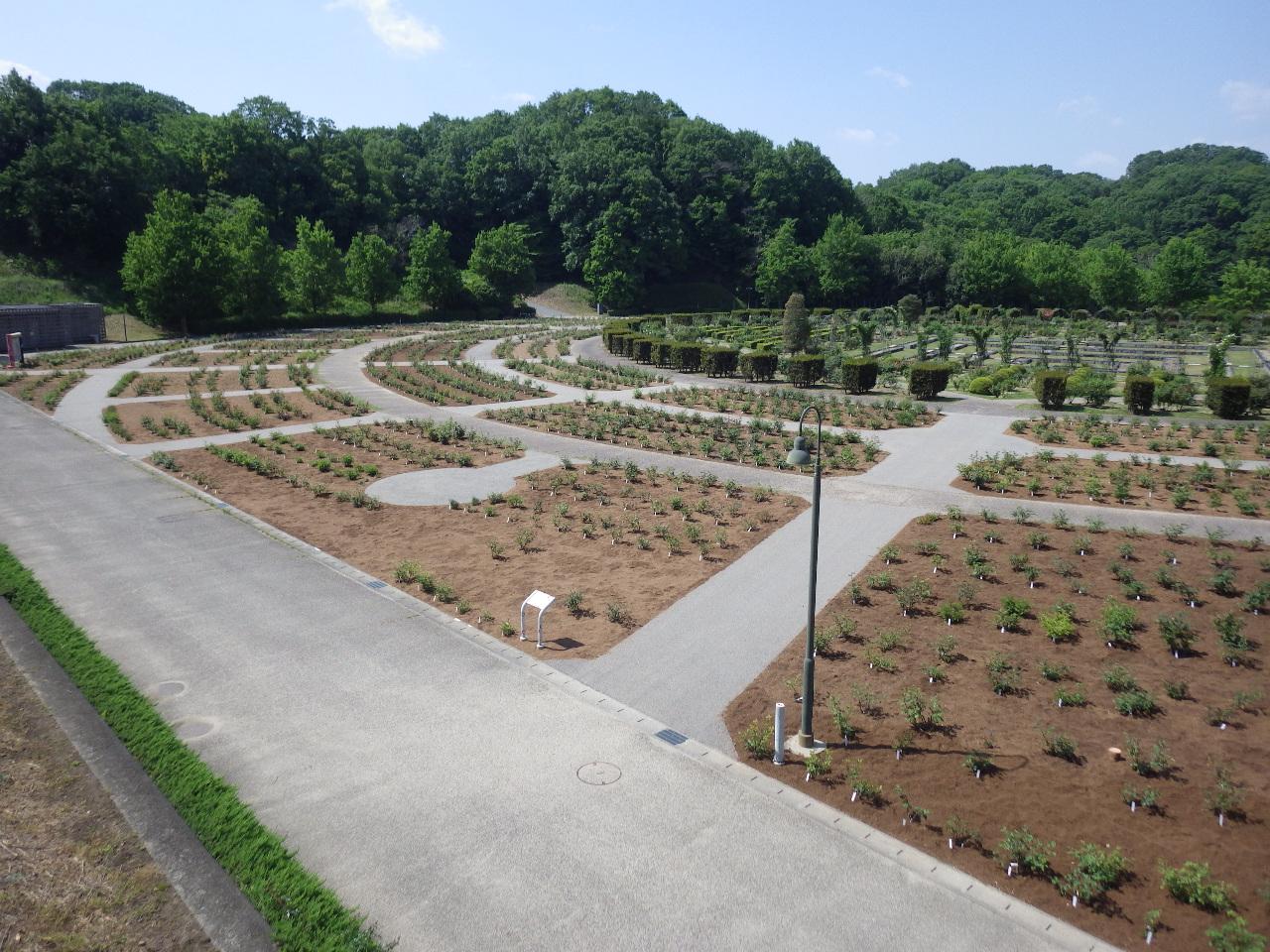 岐阜県 花フェスタ記念公園 バラ園土壌改良工事